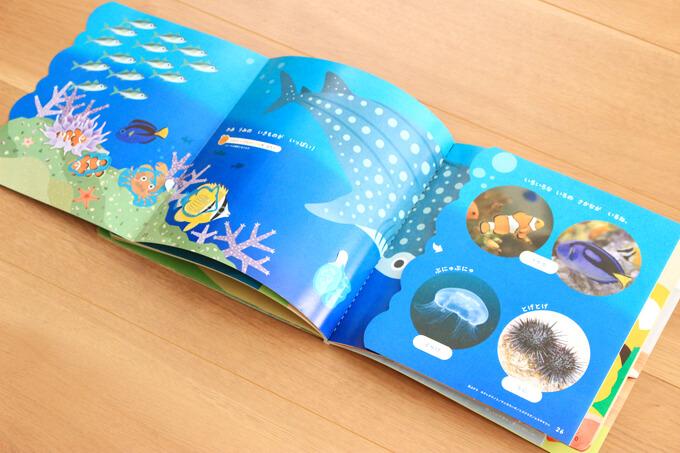 海の生き物が学べるページ